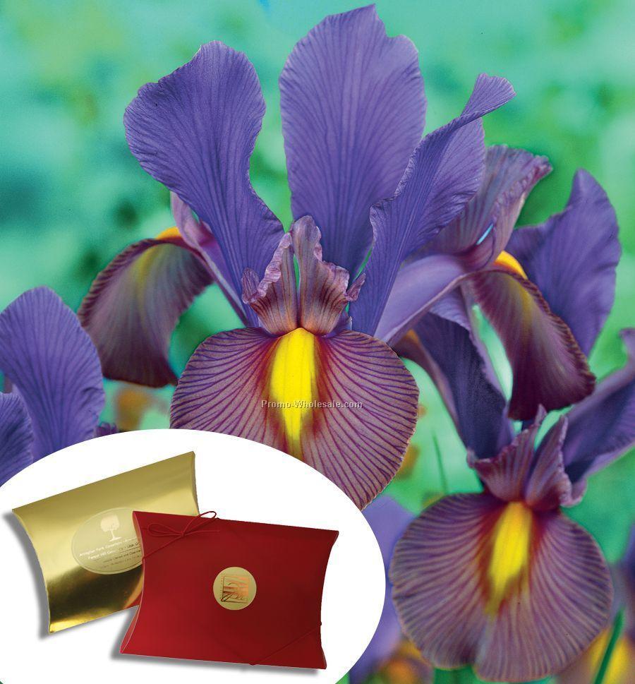 Five Blue Dutch Iris Bulbs In A Kraft Pillow Box With 4