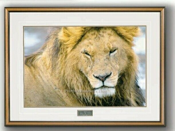 "20""x14"" The Noble One - African Lion Portrait In Wood Frame (Medium)"