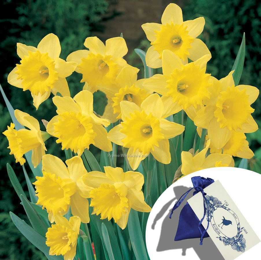 different colored daffodils images - reverse search