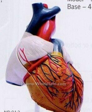 Heart Model In 2 Parts