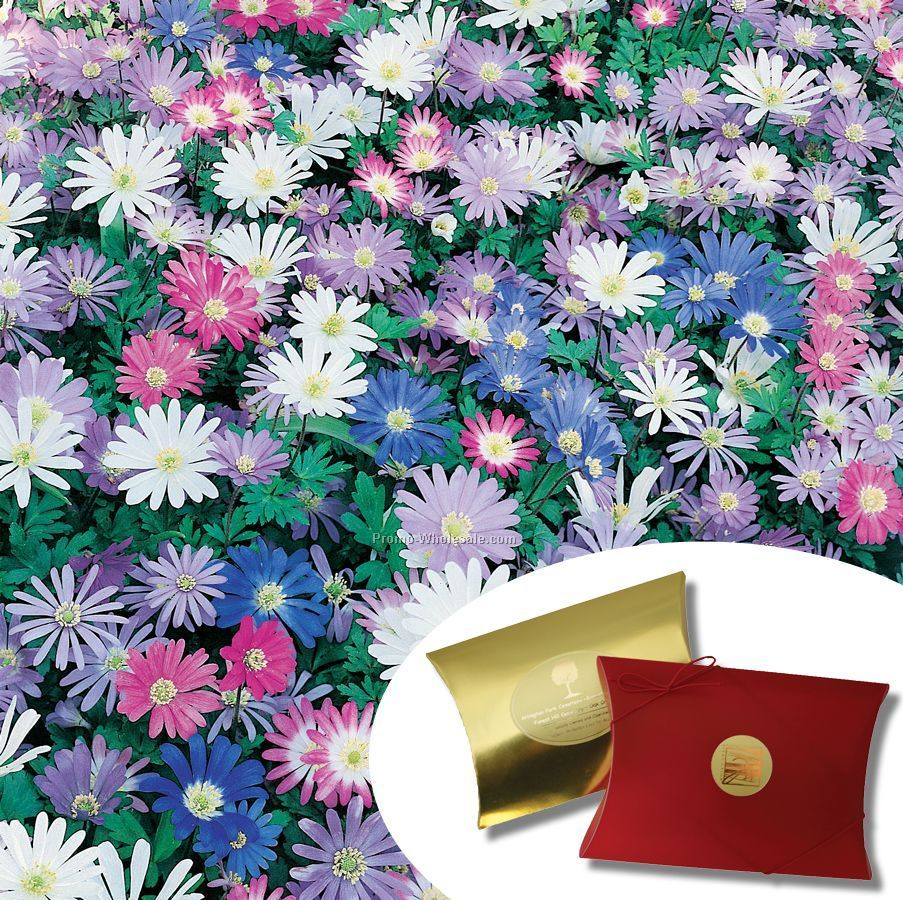 Fifteen (15) Anemone Blanda Bulbs In Kraft Pillow Box With 4-color Label