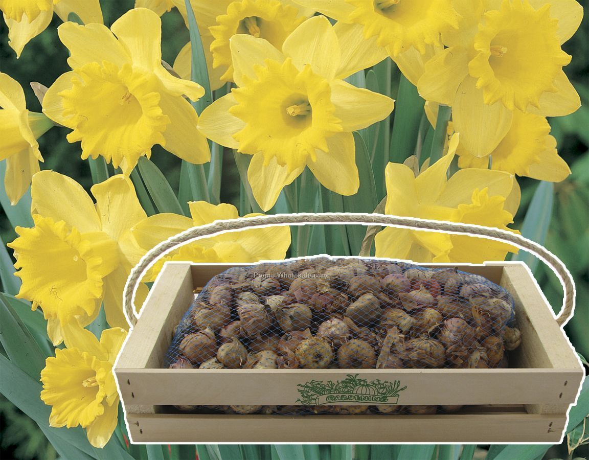 One-hundred Dutch Daffodil Bulbs In A Mini-crate With Custom 1-color Imprnt