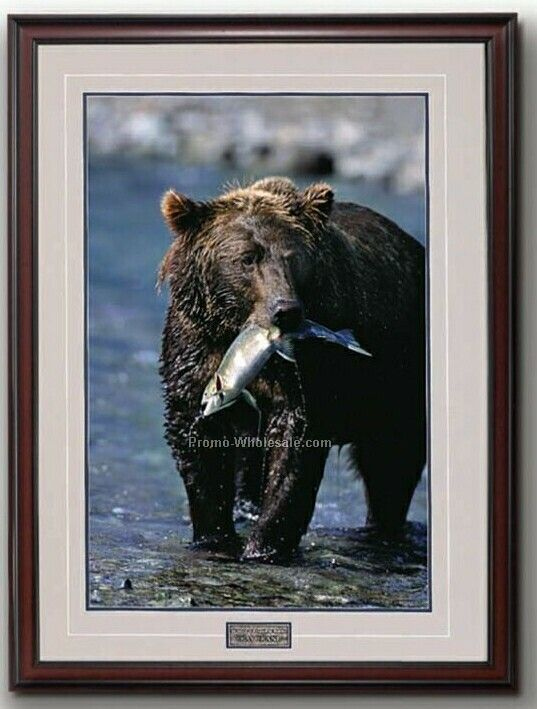 "10""x14"" Gift Of The Run- Alaskan Brown Bear Portrait In Wood Frame (Small)"