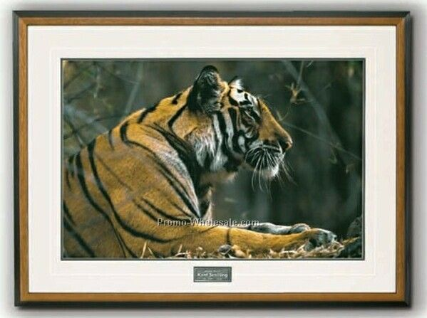"20""x14"" The Prince Of Rewa - Bengal Tiger Portrait In Wood Frame (Medium)"