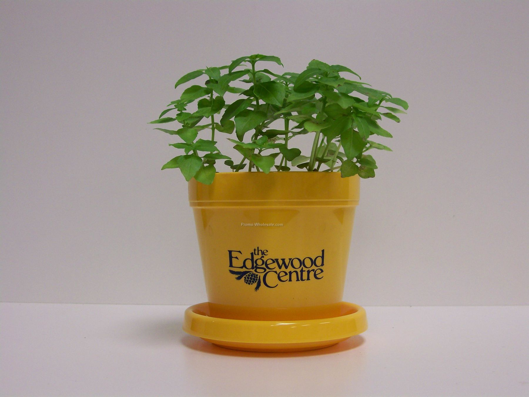 "Basil (Dwarf Greek) Standard Logo Planter Herb 3-1/2""x3-3/4"" (No Imprint)"